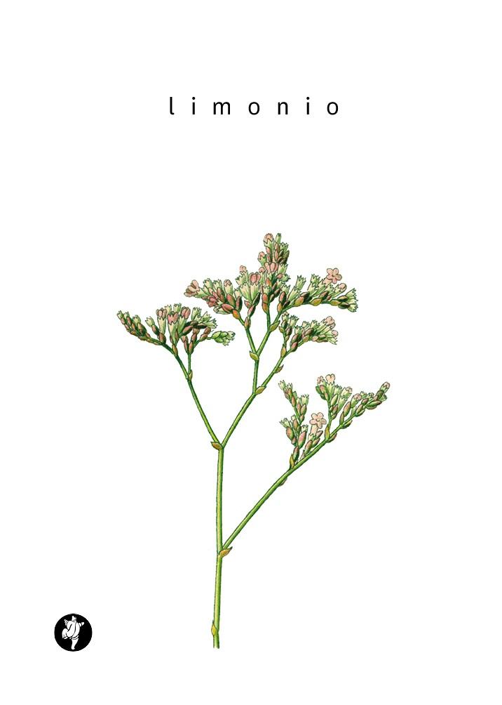 Limonio - Antonio Lillo