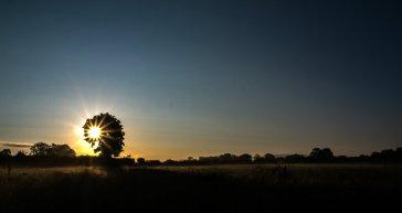 Dog-Trail morgens früh (1 von 1)-w1280