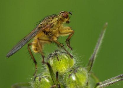 Fliegentier (1 von 1)-w1280