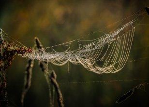 Spinnennetz im Feld (1 von 1)-w1280