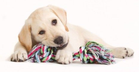 Image result for dog chewing toy
