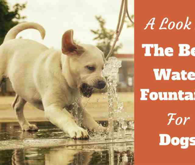 Best Pet Fountain For Dogs Review 6 Top Choices For 2019