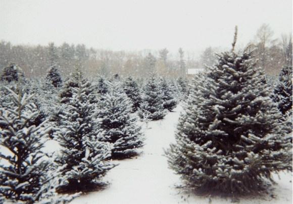 Navidad ecología