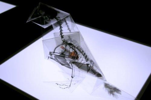 Arte, ecología, papiroflexia y radiografías