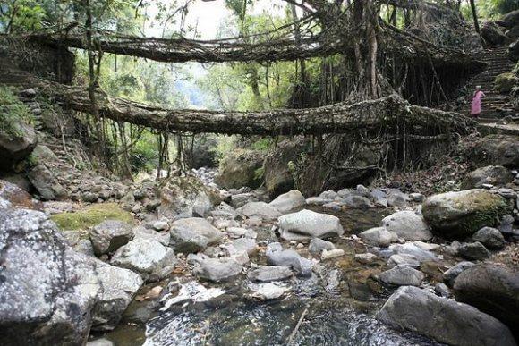 Puentes vivientes Cherrapunji