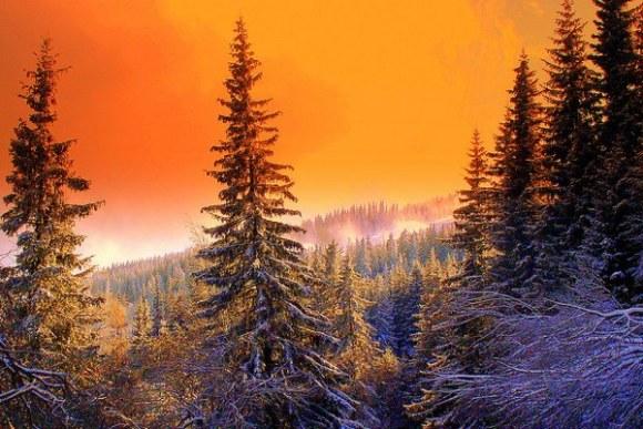 Arboles bosques