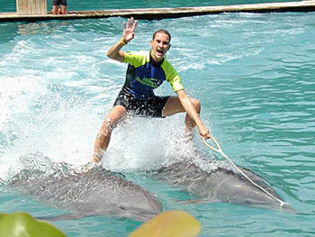SOS Delfines denuncia espectáculos cetáceos