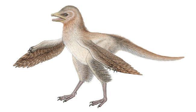 Eosinopteryx siembra duda origen aves
