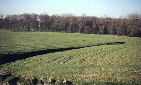 Campos batalla Azincourt