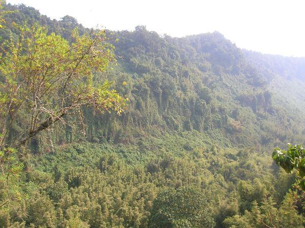 Busca gorilas montaña I