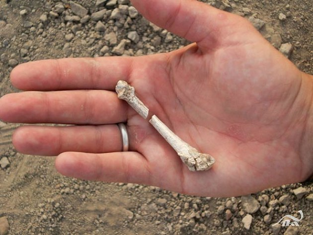 Descubren nuevas especies pre-humanas en Etiopía y China