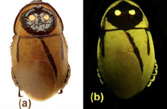 Un insecto descubierto y extinguido casi a la vez