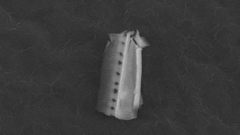 Descubren 'bichos' extraterrestres en la atmósfera