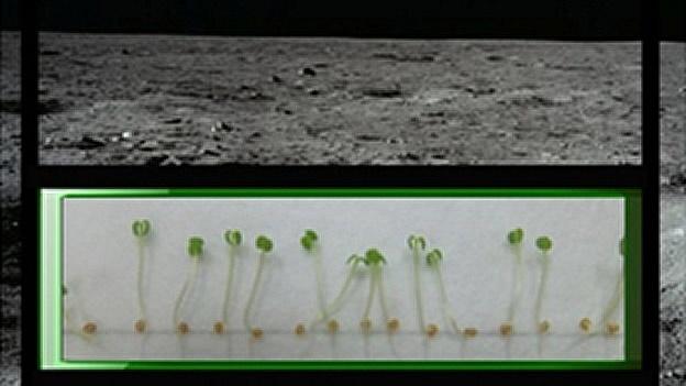 La NASA plantará nabos en la Luna 4
