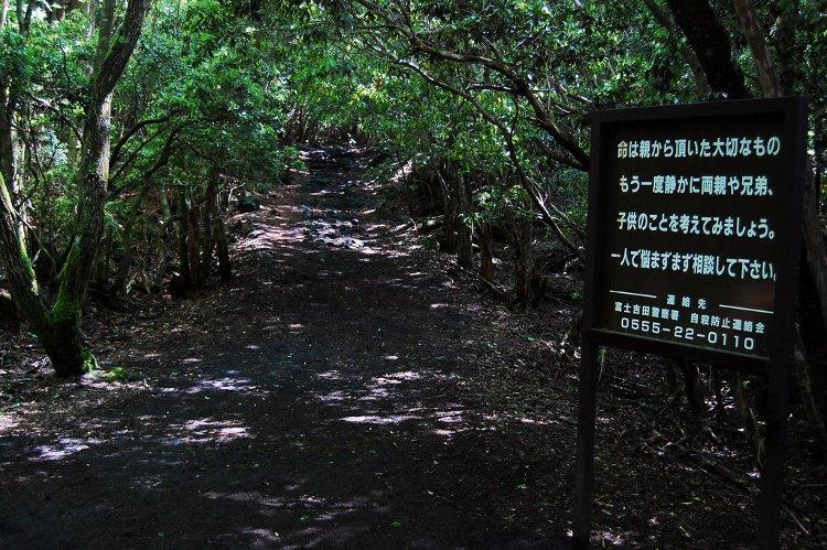 Aokigahara, el bosque japonés de los suicidas