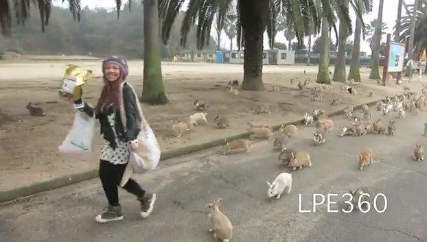 La japonesa Isla de los Conejos, el lugar más adorable del mundo?