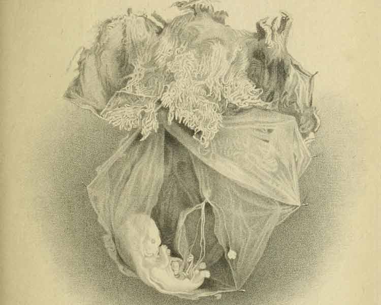 Digitalizadas más de 15 millones de páginas de libros de medicina del s. XIX