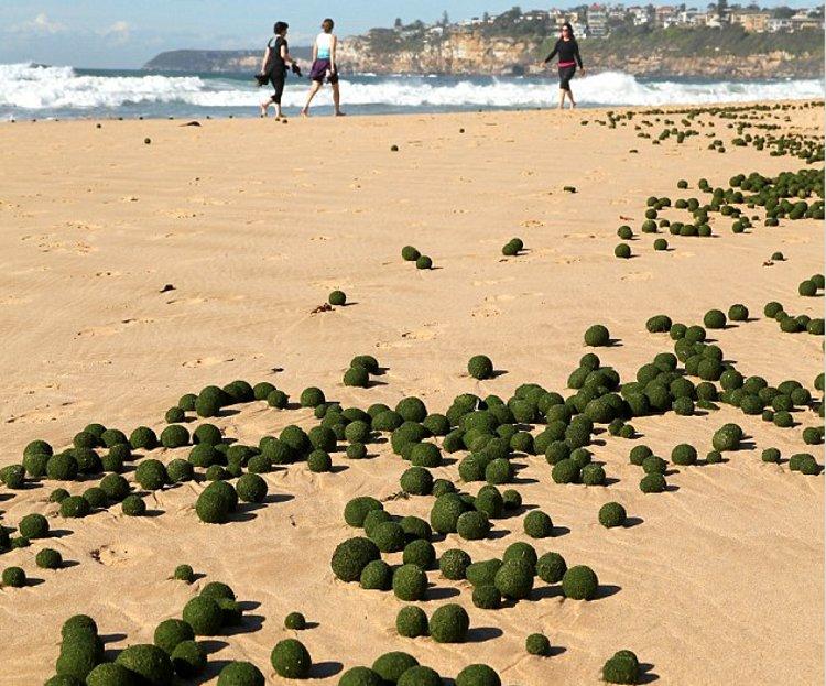 Las misteriosas bolas verdes aparecidas en una playa australiana