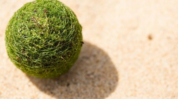 Misteriosas bolas verdes aparecidas playa australiana2