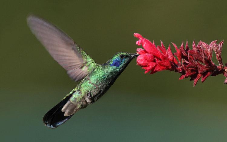 ¿Por qué al colibrí le gusta el sabor dulce y a otras aves no?