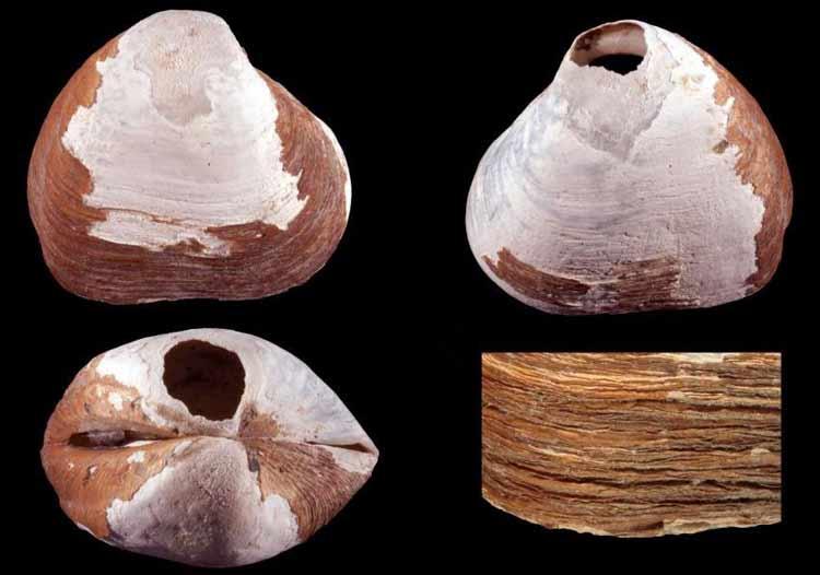 Una antigua criatura descubierta en las profundidades del Océano Ártico