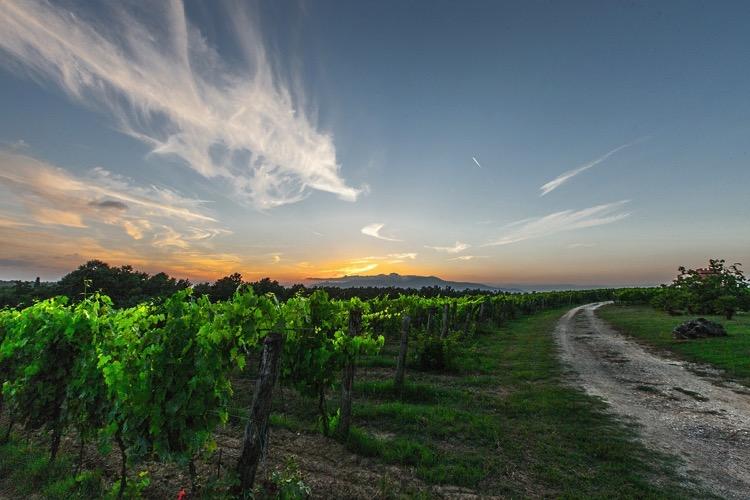 10 cosas que probablemente no sabías sobre el vino