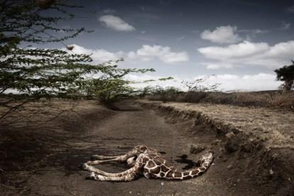 Las impactantes fotos del Syngenta Photography Award 1