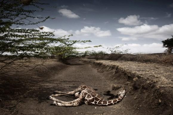 Impactantes fotos Syngenta Photography Award