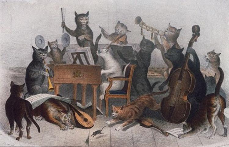 Componen música para gatos