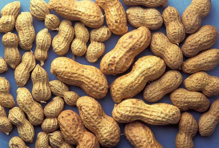 ¿Quieres vivir más años?: come cacahuetes a diario