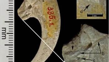 Los neandertales usaban garras de águila como joyas