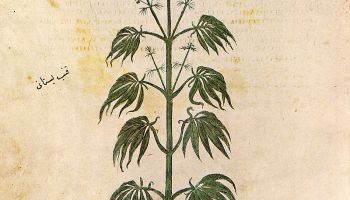 La milenaria historia del cannabis medicinal 1