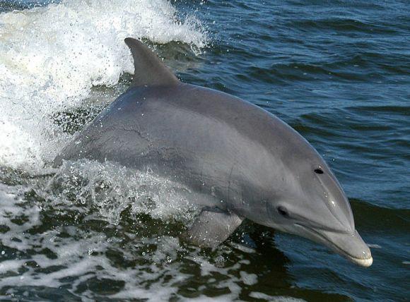 Avistamiento cetaceos Estrecho 2