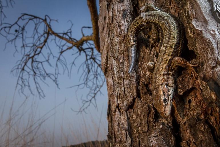 Fotos ganadoras British Wildlife Photographer Year 2