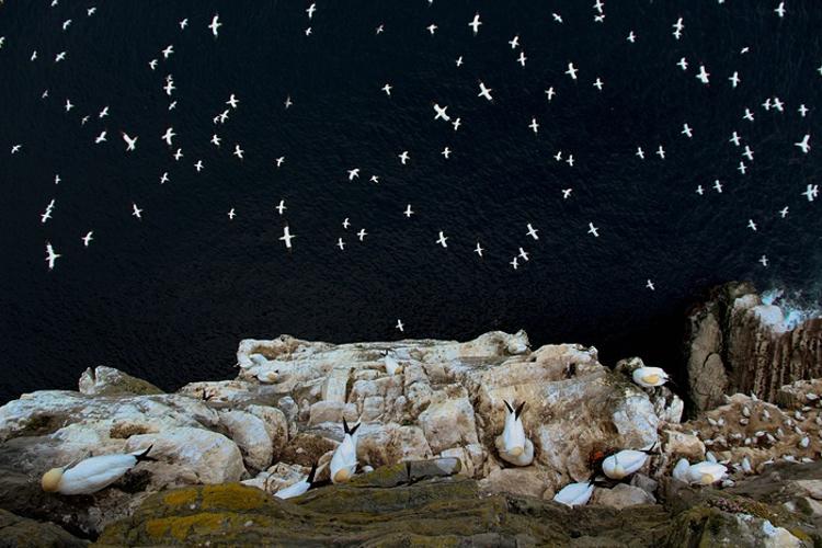 Fotos ganadoras British Wildlife Photographer Year