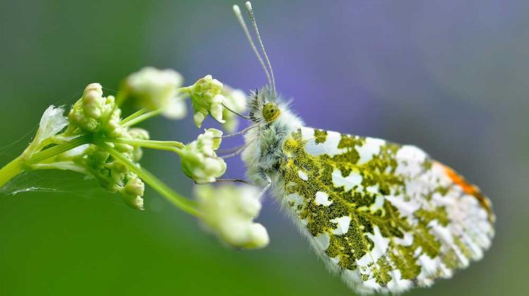 Mejores fotos premio fotografia animal Sociedad Zoologica Londres 3