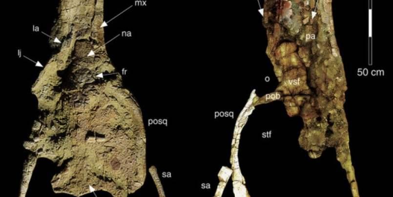 Imágenes del cráneo de la nueva especie