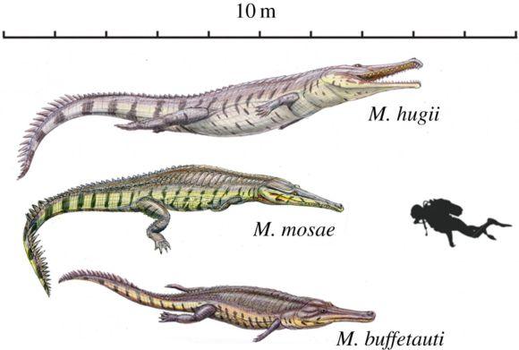 Los Machimosaurus europeos