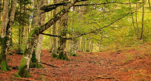 cinco extraordinarios bosques norte España