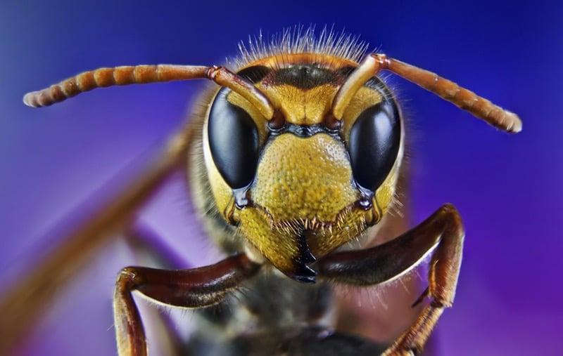 Insectos / foto Shutterstock