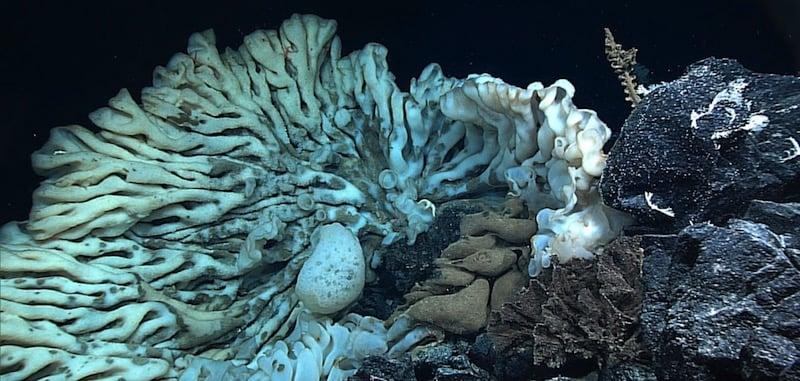 La esponja marina más grande del mundo, descubierta en Hawai