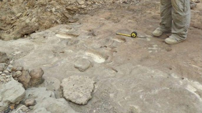 Las más antiguas huellas de Homo Erectus, en Eritrea