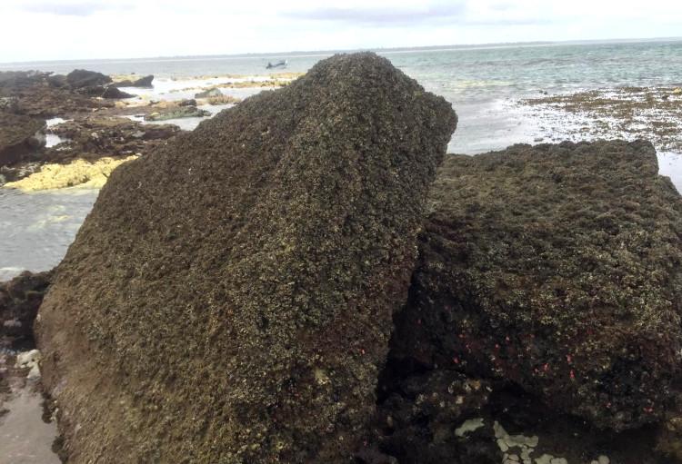 Descubren costa tanzana las presuntas ruinas ciudad perdida Rhapta