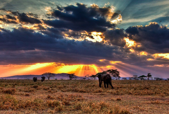 El safari más famoso de la historia y los parques nacionales de África