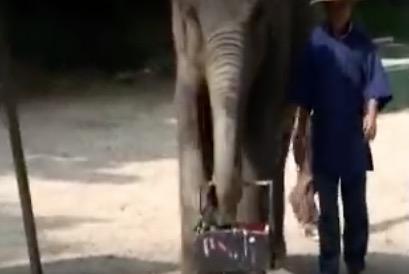 El elefante que pinta