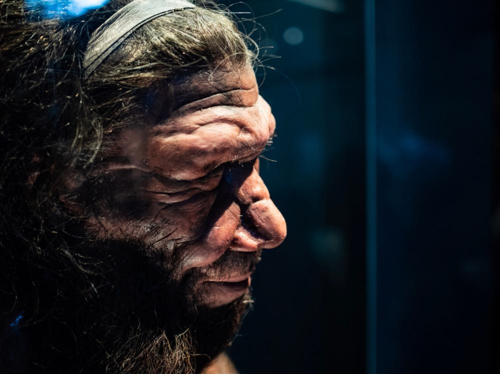 Un estudio sugiere que los Neandertales se extinguieron debido a una enfermedad crónica