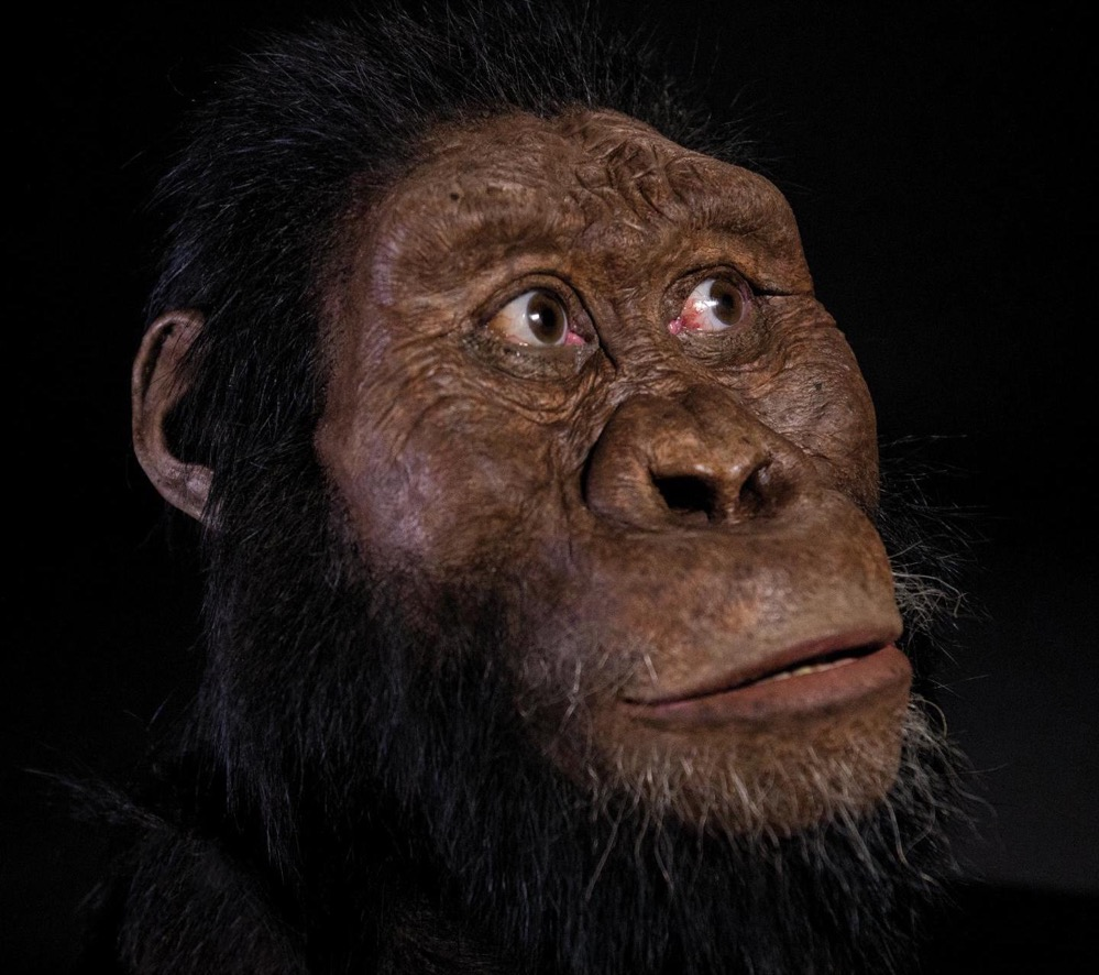El rostro de los antepasados de Lucy: encuentran por primera vez un cráneo de Australopithecus anamensis