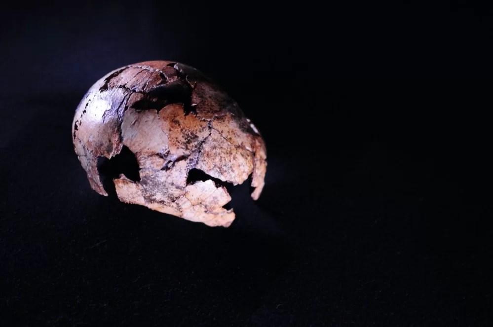 Encuentran los restos de Homo erectus más antiguos conocidos