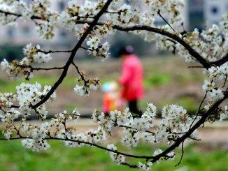 Primavera-da-incubo-per-l'intestino-copertina