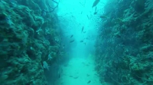 Plongée couloir aux gorgones le Grand Congloué à Marseille